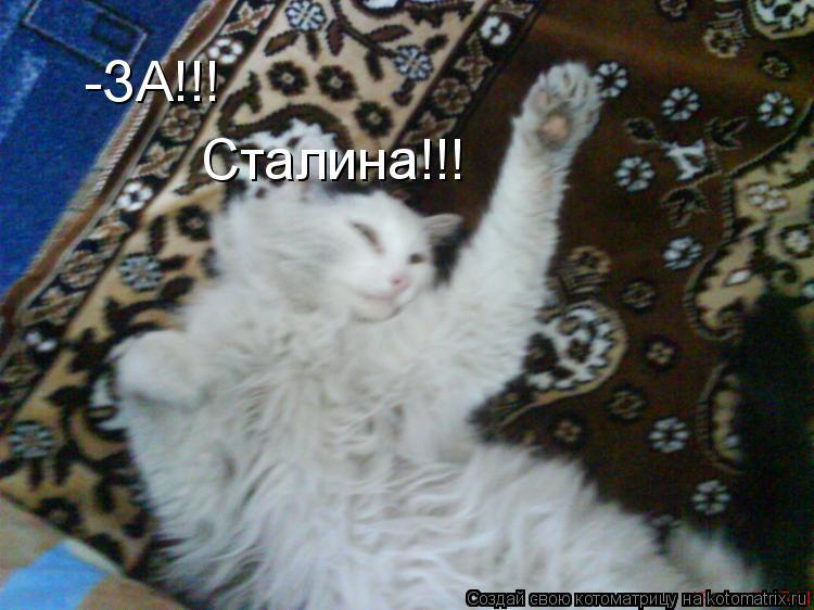 Котоматрица: -ЗА!!! Сталина!!!