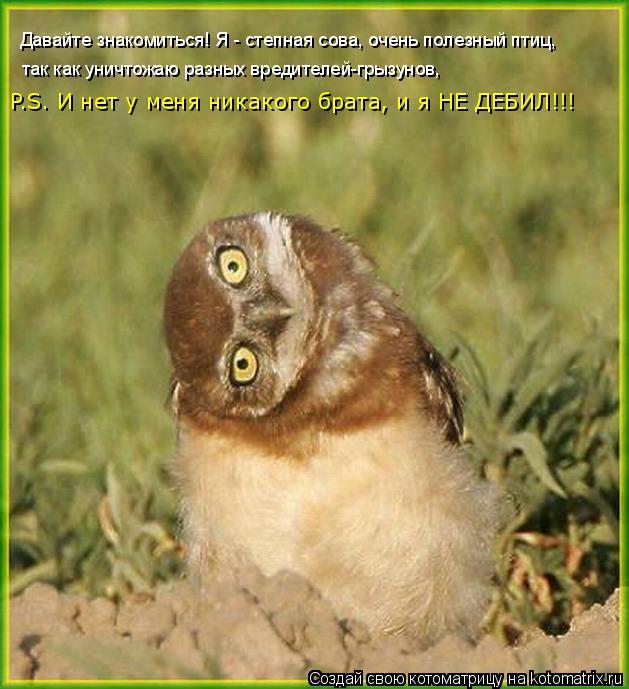 Котоматрица: Давайте знакомиться! Я - степная сова, очень полезный птиц,   так как уничтожаю разных вредителей-грызунов,   P.S. И нет у меня никакого брата, и
