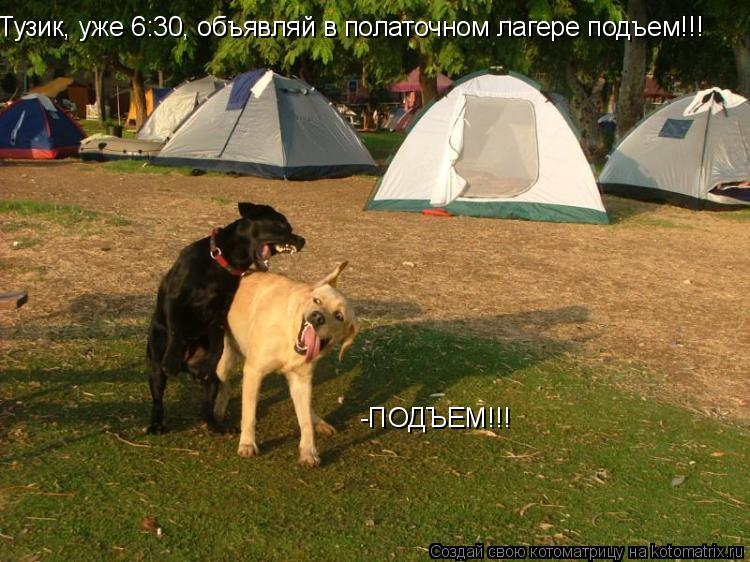Котоматрица: Тузик, уже 6:30, объявляй в полаточном лагере подъем!!! -ПОДЪЕМ!!!