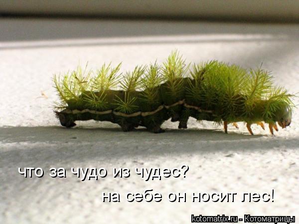 Котоматрица: что за чудо из чудес? на себе он носит лес!