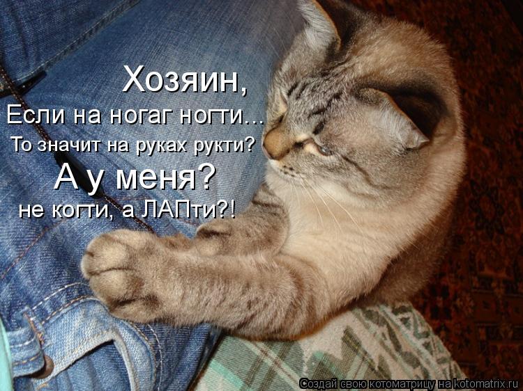 Котоматрица: Если на ногаг ногти... То значит на руках рукти? Хозяин, А у меня? не когти, а ЛАПти?!