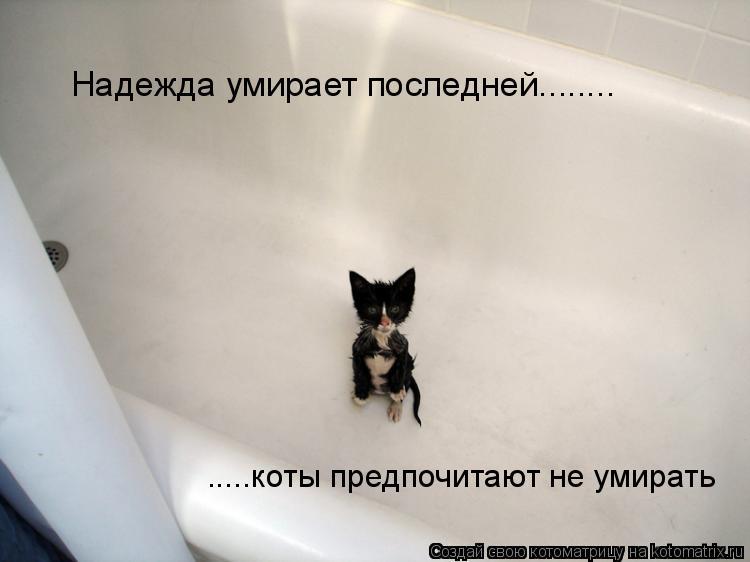 Котоматрица: Надежда умирает последней........ .....коты предпочитают не умирать