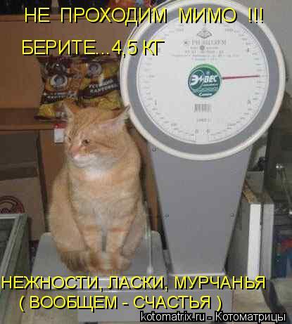 Котоматрица: НЕ  ПРОХОДИМ  МИМО  !!! БЕРИТЕ...4,5 КГ НЕЖНОСТИ, ЛАСКИ, МУРЧАНЬЯ ( ВООБЩЕМ - СЧАСТЬЯ )