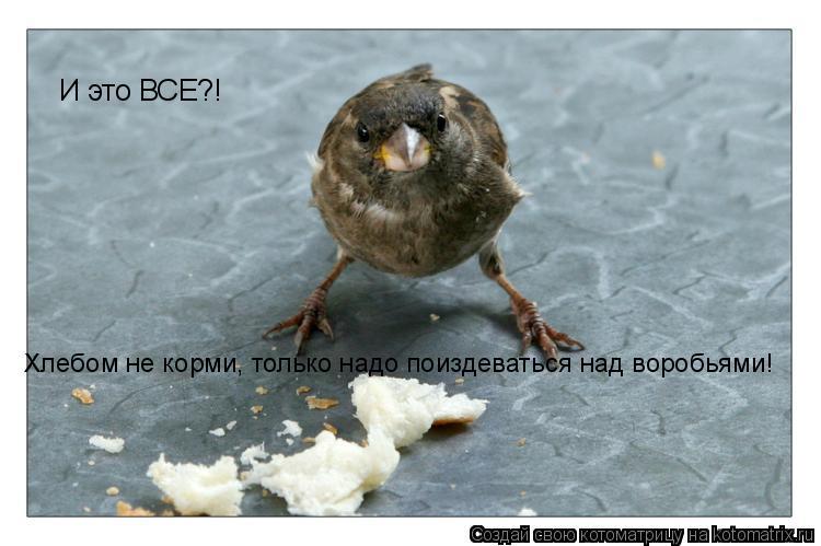 Кормить птиц хлебом во сне
