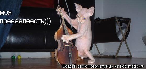 Котоматрица: преееелеесть))) моя