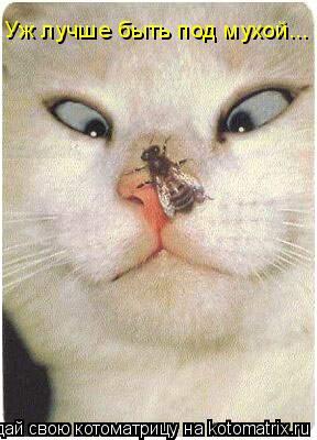 Котоматрица: Уж лучше быть под мухой...