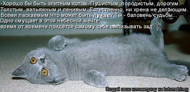 Котоматрица: -Хорошо бы быть элитным котом. Пушистым, породистым, дорогим.  Толстым, вальяжным и ленивым. Естественно, ни хрена не делающим. Одно смущает в