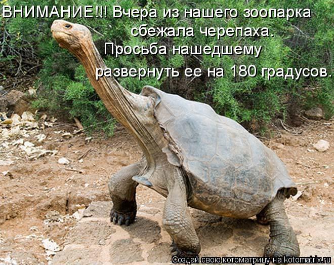 Котоматрица: ВНИМАНИЕ!!! Вчера из нашего зоопарка сбежала черепаха. Просьба нашедшему развернуть ее на  Просьба нашедшему  развернуть ее на 180 градусов.