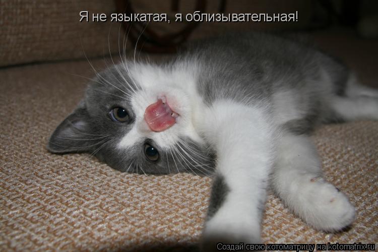 Котоматрица: Я не языкатая, я облизывательная!