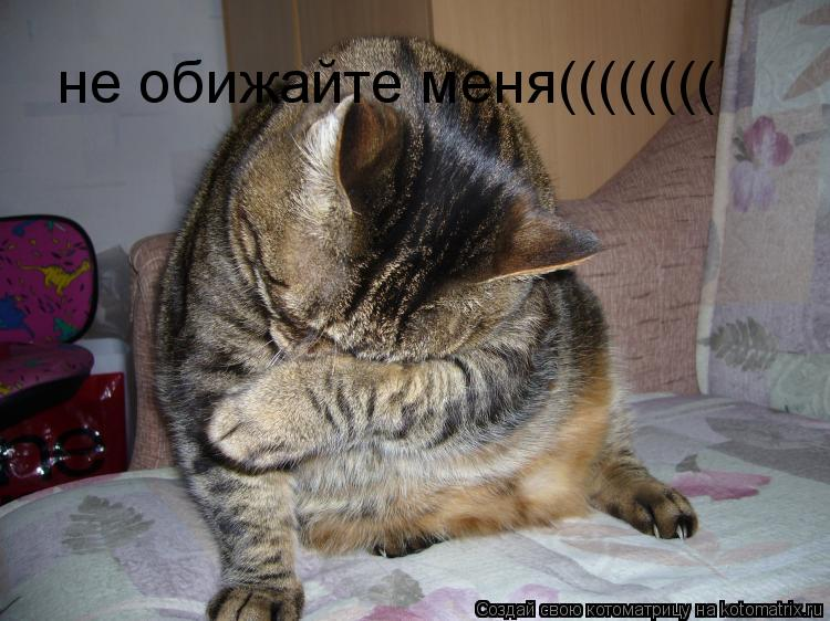 Котоматрица: не обижайте меня((((((((