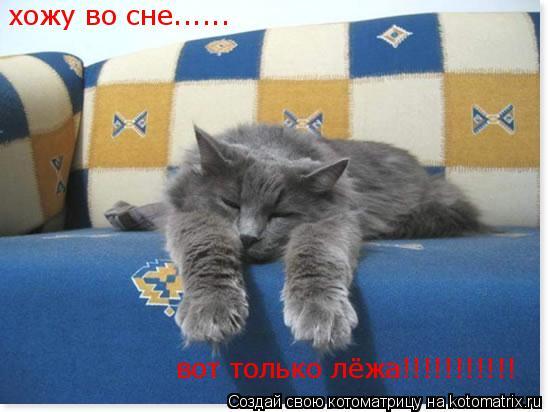 Котоматрица: хожу во сне...... вот только лёжа!!!!!!!!!!!
