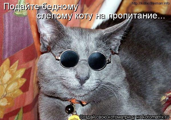 Котоматрица: Подайте бедному  слепому коту на пропитание...