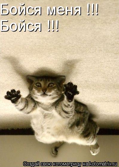 Котоматрица: Бойся меня !!! Бойся !!!