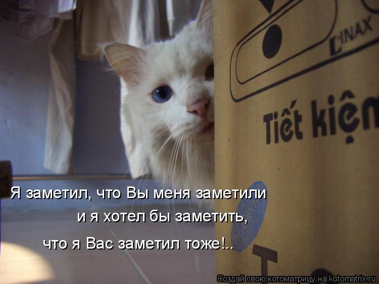 Котоматрица: Я заметил, что Вы меня заметили и я хотел бы заметить, что я Вас заметил тоже!..