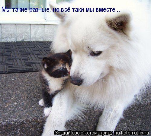 Котоматрица: Мы такие разные, но всё таки мы вместе...