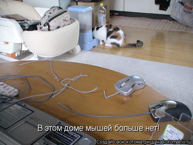 Котоматрица: В этом доме мышей больше нет!
