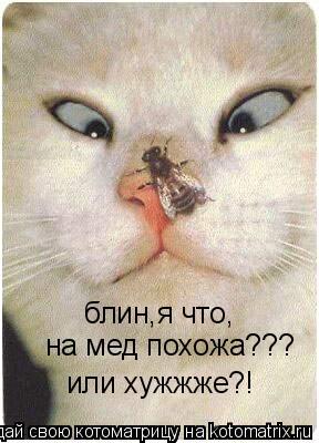 Котоматрица: блин,я что, на мед похожа??? или хужжже?!