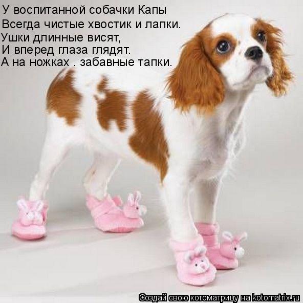 Котоматрица: У воспитанной cобачки Капы А на ножках – забавные тапки… И вперед глаза глядят. Ушки длинные висят, Всегда чистые хвостик и лапки.