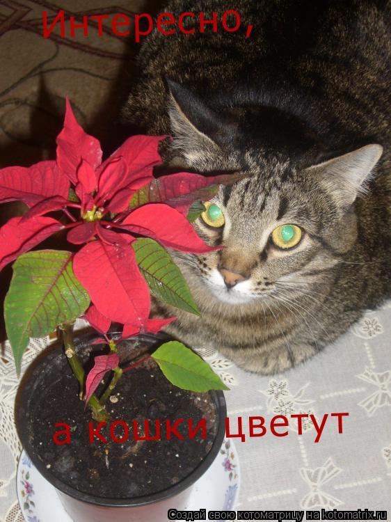 Котоматрица: Интересно, а кошки цветут