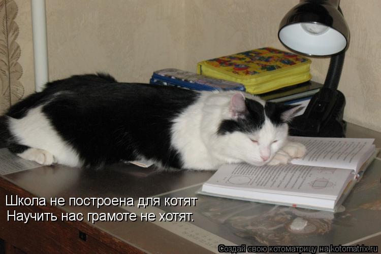 Котоматрица: Школа не построена для котят Научить нас грамоте не хотят…