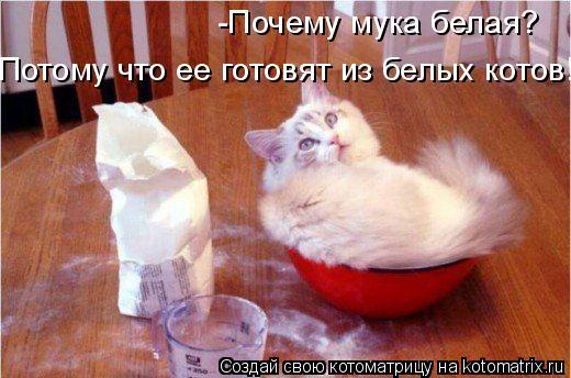 Котоматрица: -Почему мука белая? Потому что ее готовят из белых котов!