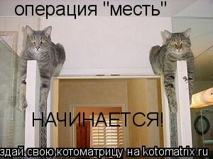 """Котоматрица: операция """"месть"""" НАЧИНАЕТСЯ!"""