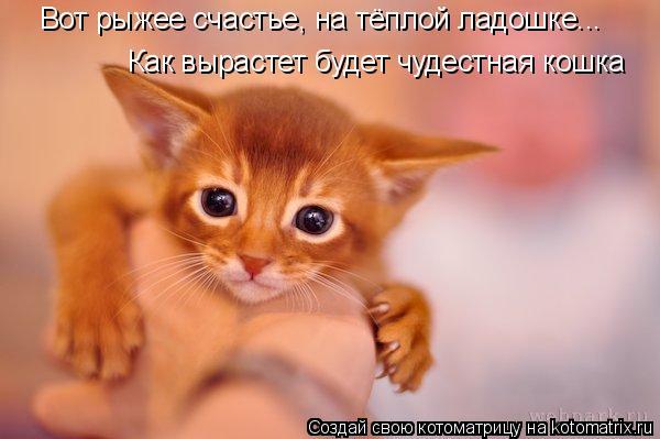 Котоматрица: Вот рыжее счастье, на тёплой ладошке... Как вырастет будет чудестная кошка