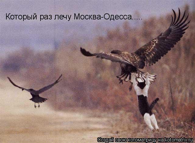 Котоматрица: Который раз лечу Москва-Одесса.....