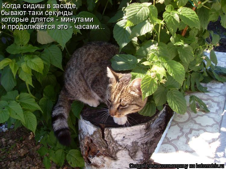 Котоматрица: Когда сидиш в засаде, бывают таки секунды которые длятся - минутами и продолжается это - часами...