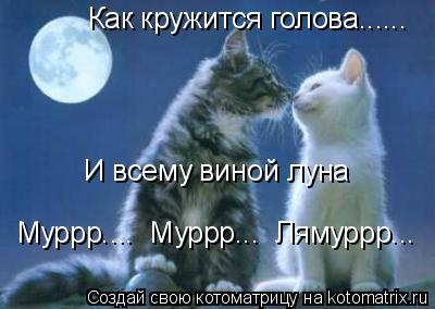 Котоматрица: Как кружится голова...... И всему виной луна Муррр....  Муррр...  Лямуррр...