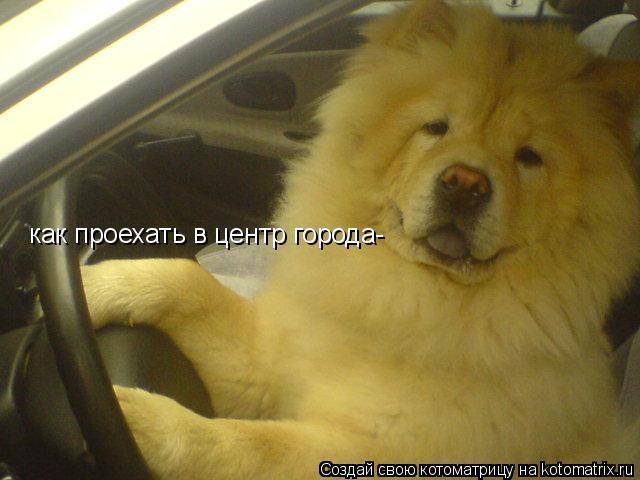 Котоматрица: как проехать в центр города-