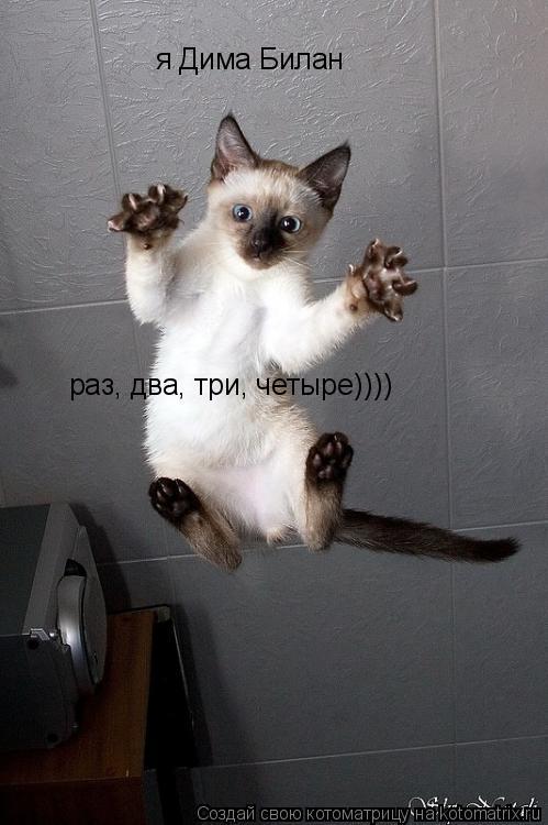 Котоматрица: я Дима Билан я Дима Билан раз, два, три, четыре)))) раз, два, три, четыре))))