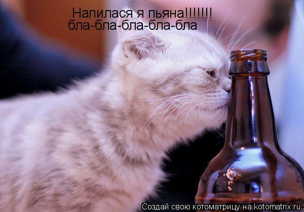 Котоматрица: Напилася я пьяна!!!!!!! бла-бла-бла-бла-бла