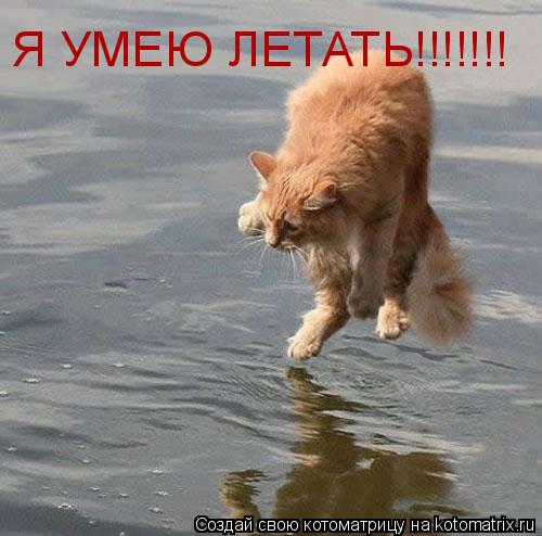 Котоматрица: Я УМЕЮ ЛЕТАТЬ!!!!!!!