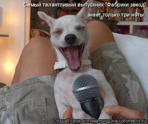 """Котоматрица: знает только три ноты Самый талантливый выпускник """"Фабрики звезд"""""""