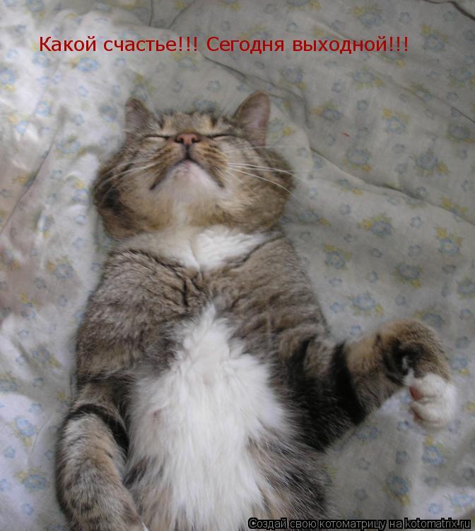 Котоматрица: Какой счастье!!! Сегодня выходной!!!