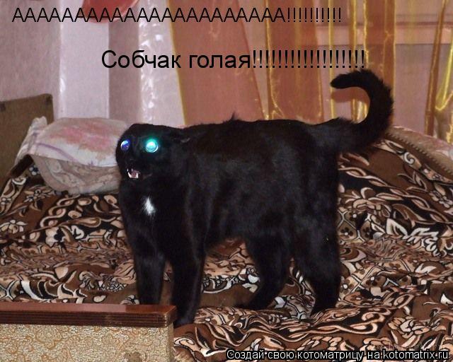 Котоматрица: АААААААААААААААААААААА!!!!!!!!!! Собчак голая!!!!!!!!!!!!!!!!!!
