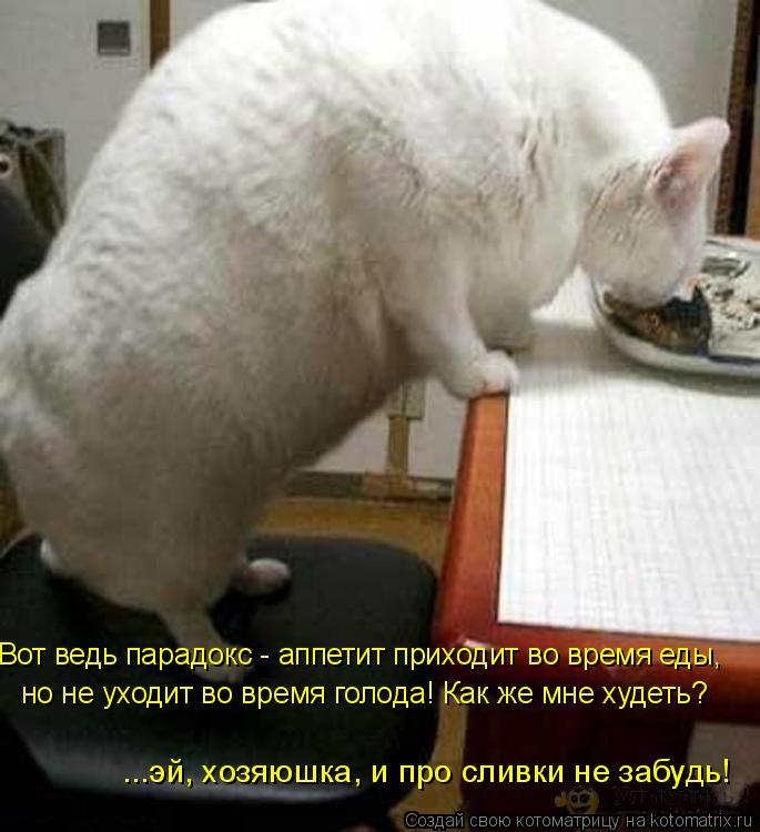 Котоматрица: Вот ведь парадокс - аппетит приходит во время еды,  но не уходит во время голода! Как же мне худеть? ...эй, хозяюшка, и про сливки не забудь!