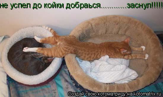 Котоматрица: не успел до койки добраься............заснул!!!!!!!!!!