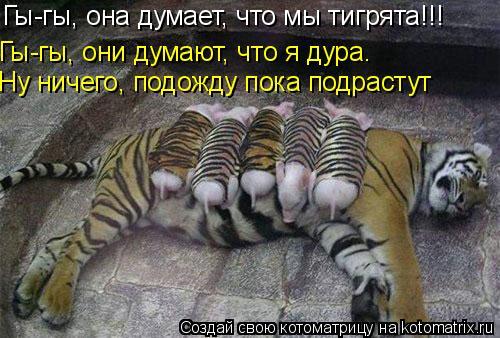 Котоматрица: Гы-гы, она думает, что мы тигрята!!! Гы-гы, они думают, что я дура. Ну ничего, подожду пока подрастут