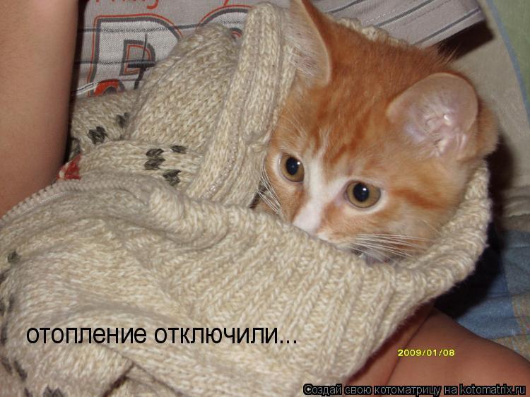 Котоматрица: отопление отключили...