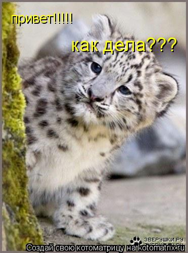 Котоматрица: привет!!!!! как дела???