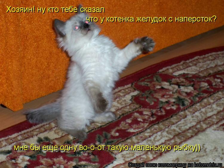 Котоматрица: Хозяин! ну кто тебе сказал что у котенка желудок с наперсток? мне бы еще одну во-о-от такую маленькую рыбку))