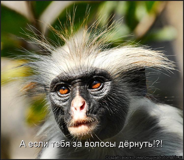 Котоматрица: А если тебя за волосы дёрнуть!?!