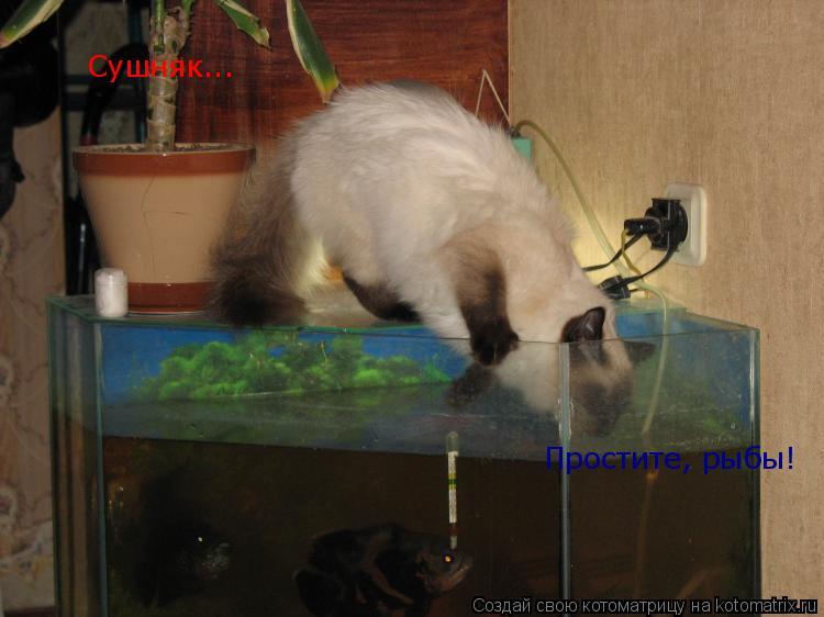 Котоматрица: Сушняк... Простите, рыбы!