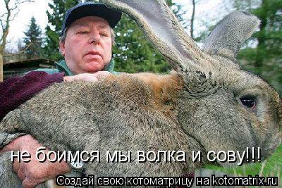 Котоматрица: не боимся мы волка и сову!!!