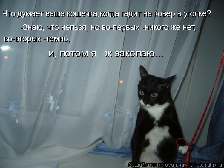 Котоматрица: Что думает ваша кошечка,когда гадит на ковер в уголке? -Знаю, что нельзя, но во-первых -никого же нет, во-вторых -темно, и, потом я   ж закопаю...