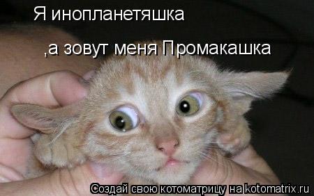 Котоматрица: Я инопланетяшка ,а зовут меня Промакашка