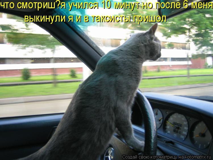 Котоматрица: что смотриш?я учился 10 минут но после 6 меня не вытерпили и я таксистом стал выкинули я и в таксисты пришол