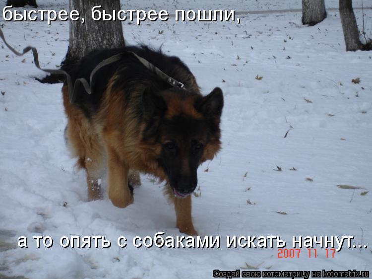 Котоматрица: быстрее, быстрее пошли, а то опять с собаками искать начнут...
